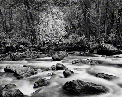 Merced River and Forest